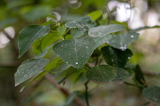 Leaf, Water, Droplets, Green, Plant, Freshness, Natural