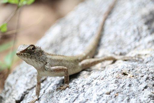 Gila, Animals, Crawl, Nature, The Little Animals