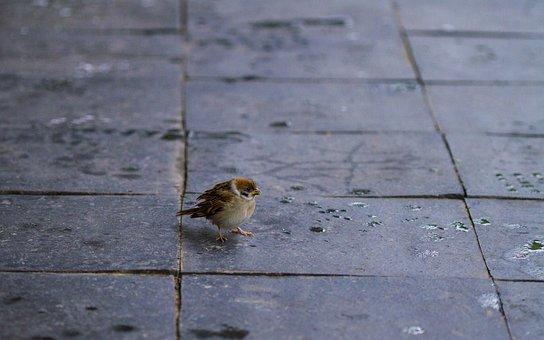 Sparrow, New, Animal, Wildlife, Birds, The City Of Fort
