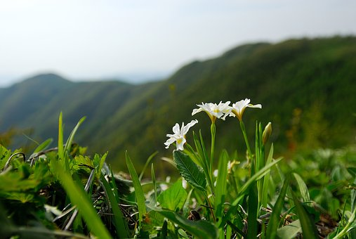 Nora Rubber Sections Above, Wildflower, Gangwon Do