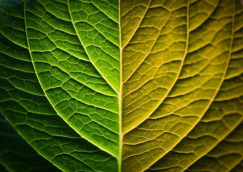 Leaf Grain, Macro, Nature, Leaf, Bicolor, Organic