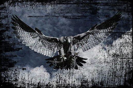 Falcon, Raptor, Wild Animal, Feather, Bird Of Prey