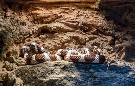 Snake, Vivarium, Reptile, Animal, Colors, Nature, Brown