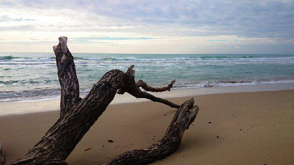 Tree, Beach, Sea, Sandy Beach, Sand, The Coast, Nature