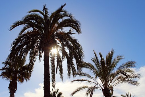 Palm Trees, Sun, Sky, Holiday, Summer, Sunset, Nature