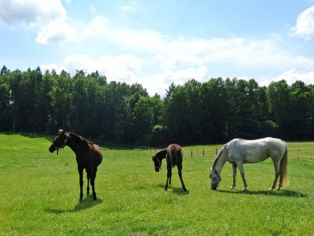 Horses, Forest, The Horse, White Horse, Animal, Horse
