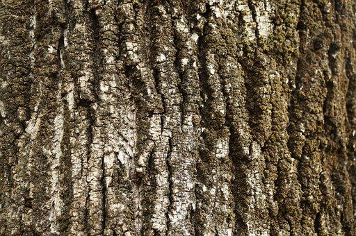 Texture, Bark, Tree, Trunk, Wood, Tree Trunk