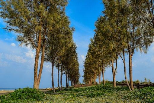 Trees, Sky, Clouds, Scenery, Nature, Seaside