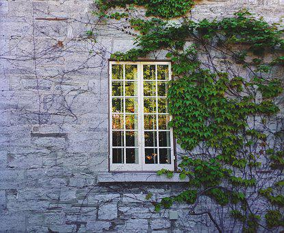 Ivy, Window, Historic, Architecture, Wall, Exterior