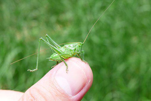 Animals, Invertebrates, Insect, Prostoskrzydłe
