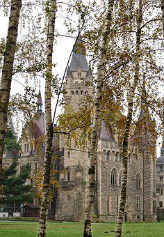The Palace, Park, Forest, Scrotum, Birch, Shrubbery
