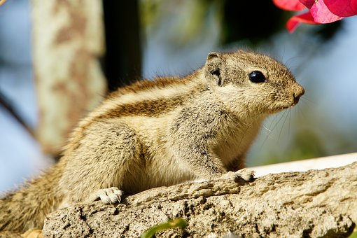 Squirrel, Animal, Rodent, Nature, Animals, Close, Nager