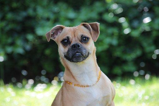 Dog, Jackrussel, Pet, Cute, Small Dog, Mammal, Terrier