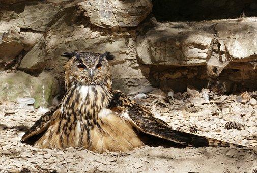Eagle Owl, Griffin, Owl, Bird, Feather, Bird Of Prey