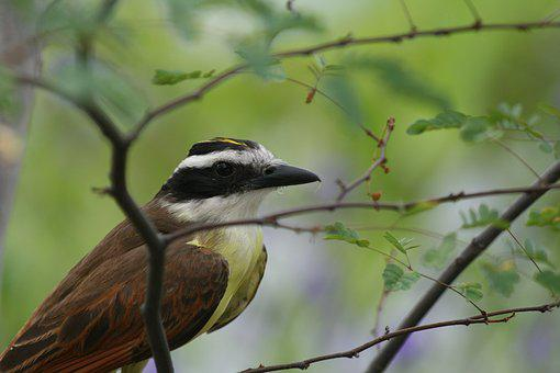 Nature, Ave, Animal, Cute, Tropical Bird, Exotic Bird