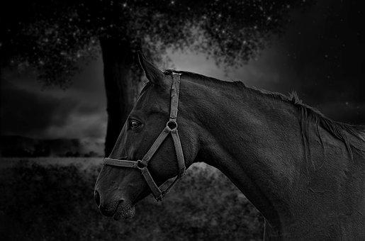 Horse, Portrait, Black, White, Fantasy, Nature, Animal
