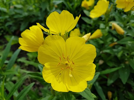 Yellow, Flower, Plant, Yellow Flower, Summer, Sunshine