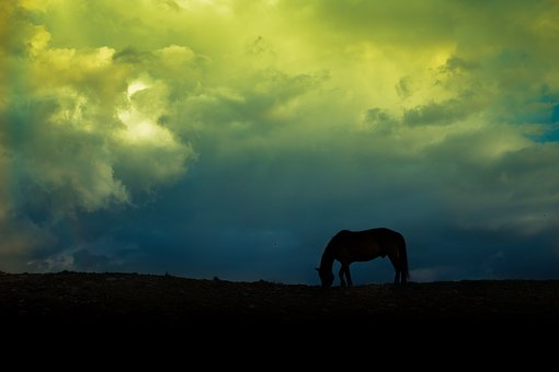 Horse, Cloud, Camp, Pet, Sky, Gold, Silhouette, Yellow