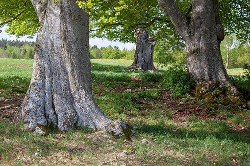 Trees, More Generations, Generations, Graduation