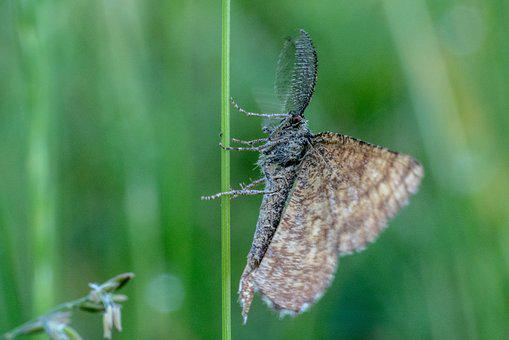 Insect, Grass, Blades Of Grass, Meadow, Grasses, Nature