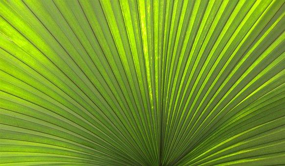 Palm, Leaf, Tropical, Green, Plant, Tropic, Natural