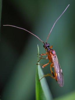 Insect, Macro, Sheet