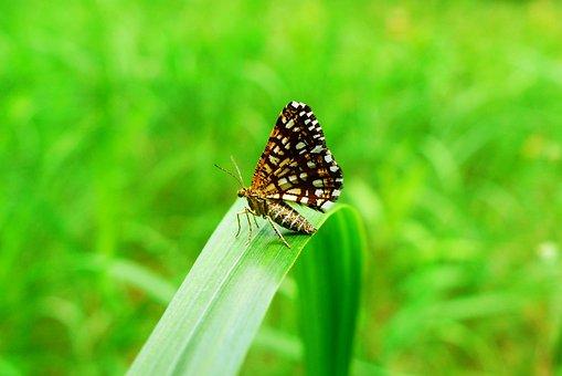 Animals, Invertebrates, Insect, Mols, Nature