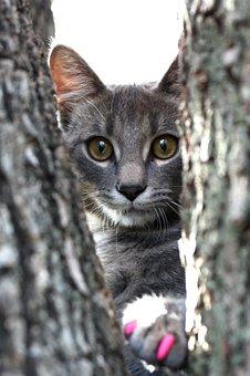 Cat, Feline, Kitten, Animal, Pet, Domestic, Cute