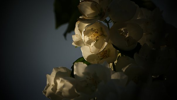 Flower, White, Light, White Flower, White Flowers