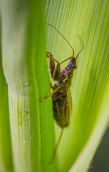 Insect, Macro, Blade Of Grass
