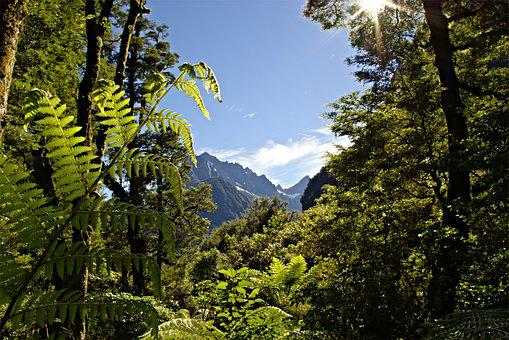Mountains, Mountain, Forest, Nature, Landscape, Ferns