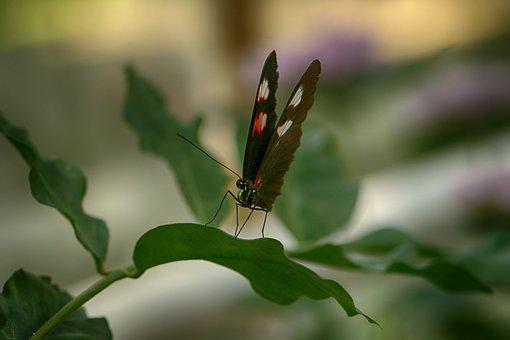 Butterfly, Nature, Insect, Tropical, Garden