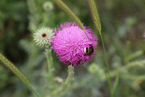 Flower, Nature, Plant, Dea, Dirt, Land, Bee