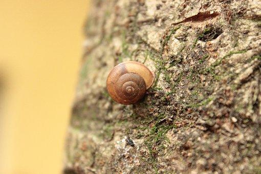 Snail, Flying, Nature, Brazil, Slug, Environment