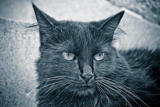Cat, Pet, Black, Domestic, Cute, Kitten, Portrait