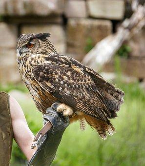 Eagle Owl, Bird, Owl, Bird Of Prey, Feather, Raptor