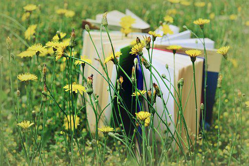 Books, Read, Relax, Meadow, Yellow Meadow Flowers