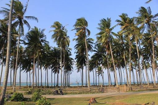 Beach, Palm, Tree, Tropical, Sea, Travel, Vacation