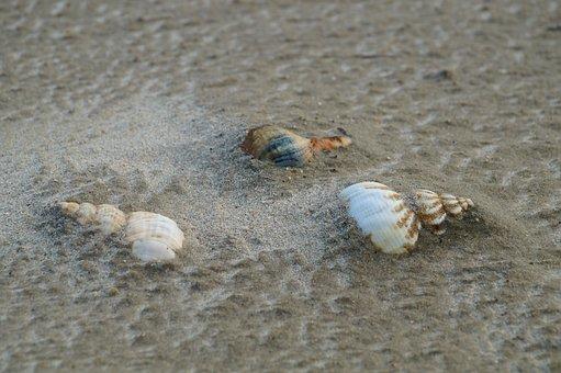 Sand, Beach, Island, Shell, Beach Sand, Sand Beach