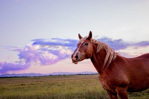 Horse, Sunset, Sun, Cloud, Sky, Orange, Nature, Grass