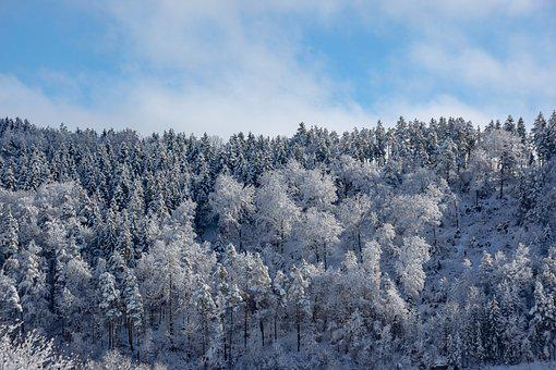 Wintry, Trees, Forest, Winter Forest