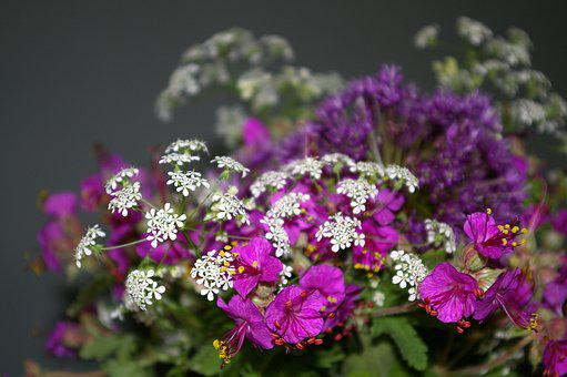 Bouquet Of Flowers, Filigree, Cranesbill, Wild Plants