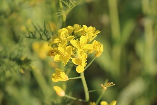 Flowers, Pulkkot, Yellow, Plants, Wildflower, Nature