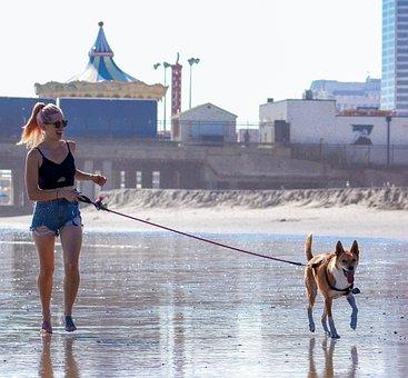 Woman And Dog, Walking The Dog, Dog Walking