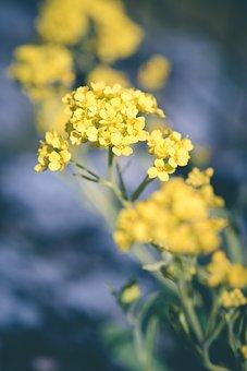 Flower, Yellow, Yellow Flower, Flowers, Yellow Flowers