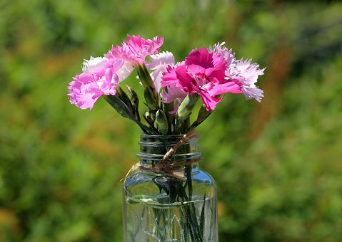 Cloves, Flowers, Pink, A Small Bunch, Spring