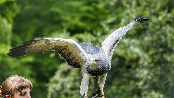 Griffin, Bird, Raptor, Access, Nature, Plumage