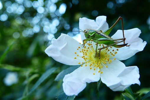 Animals, Invertebrates, Prostoskrzydłe