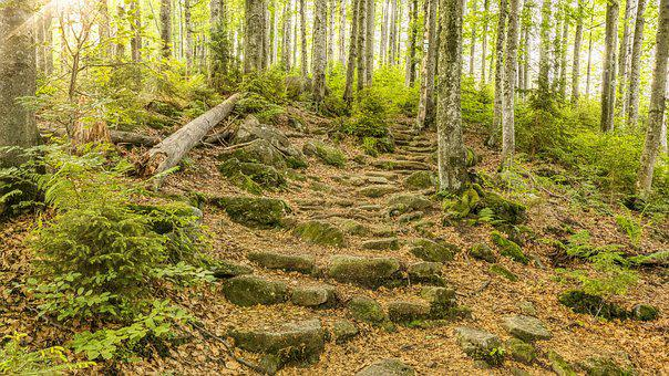 Bavarian Forest, Trail, Forest, Trees, Nature