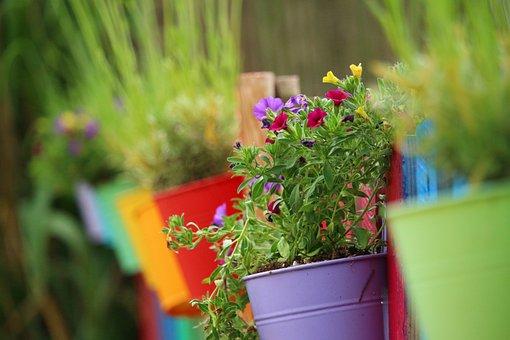 Flower, Plant, Zauberglockchen, Colorful, Rainbow